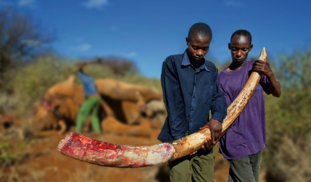 The fear of Ebola has a direct impact on poaching.