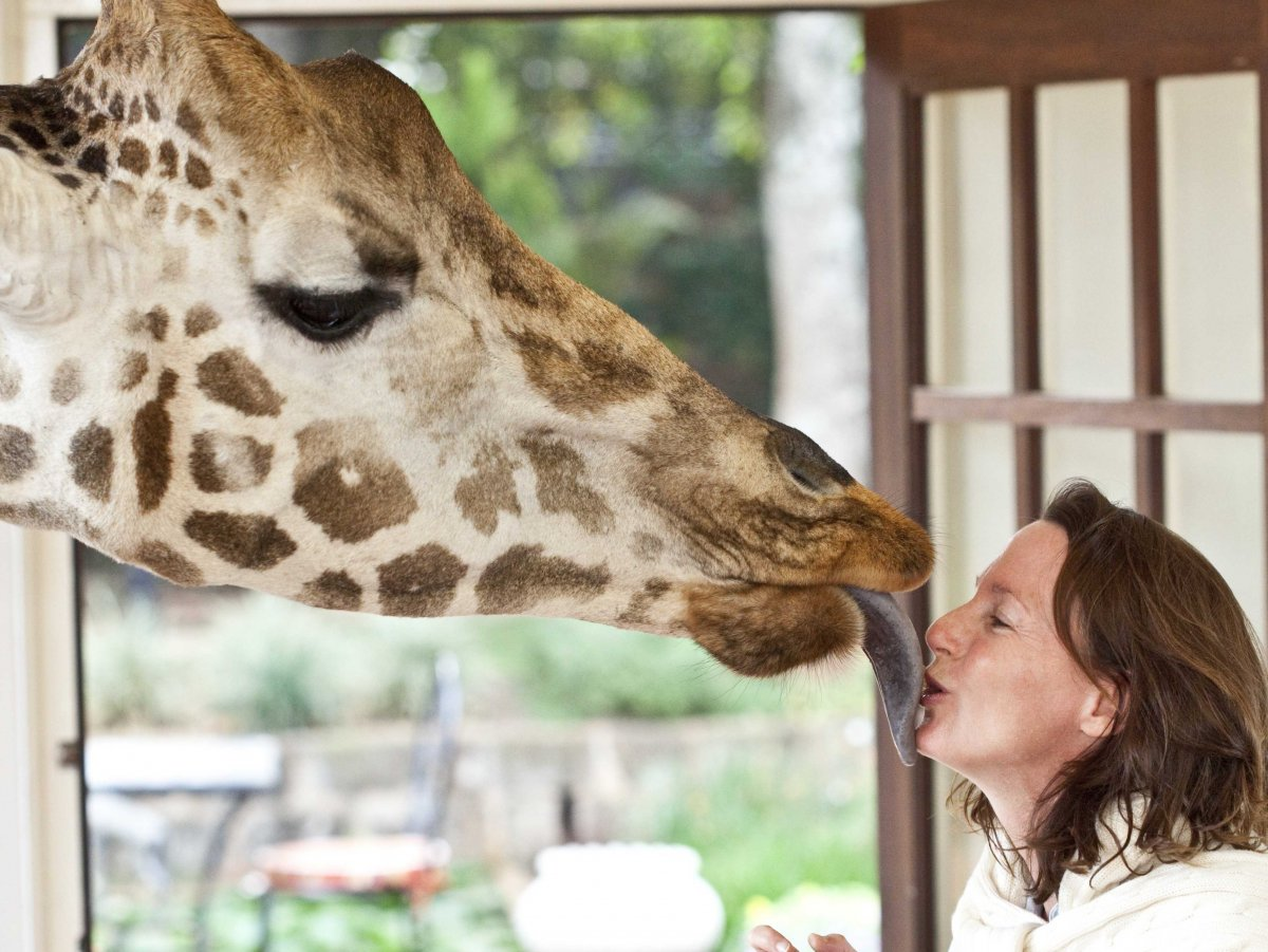 Giraffe Manor - Leaning in for a kiss