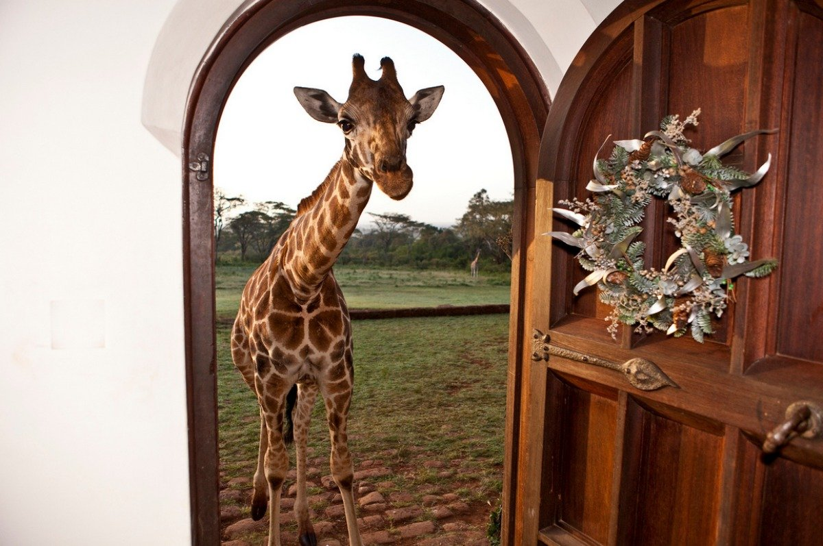 And the giraffes love to visit. Particularly in the mornings and evenings.