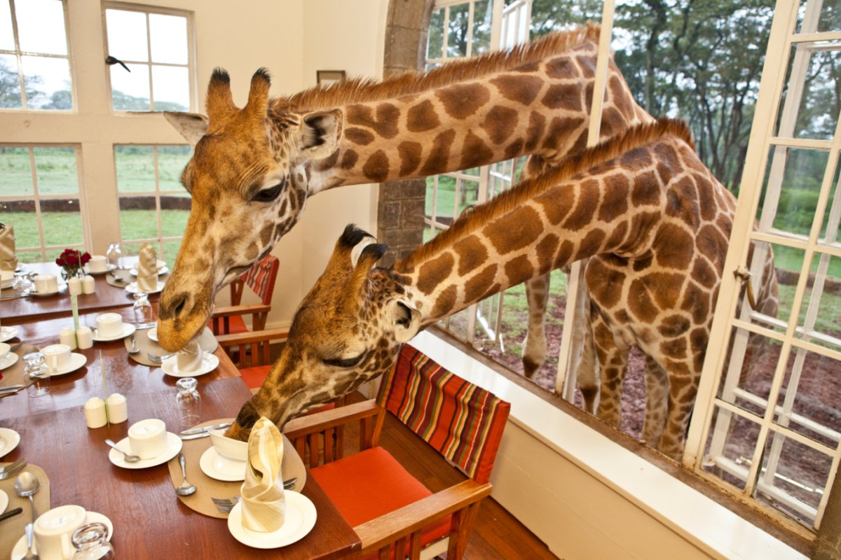 It's not uncommon for them to poke their heads in and snatch some breakfast.