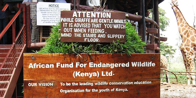 The property is shared with the AFEW Giraffe Conservation Centre and the Rothschild giraffes are free to travel back and forth between the hotel and the Centre.
