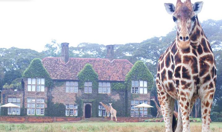 The Giraffe Manor is a boutique hotel located just outside of Nairobi, Kenya.